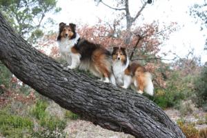 Chiennes perchées sur une branche d'arbre dans la campagne